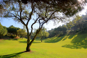 hoyo11-el-chaparral-golf-club-6
