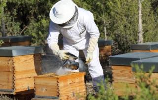 apicultor-chaparral-golf-club-costa-del-sol-mijas-spain
